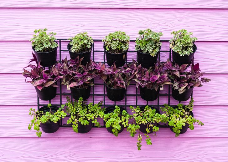 tanaman-pot-gantung-untuk-halaman-rumah-yang-sempit